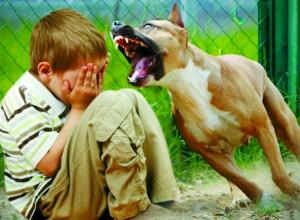 Стая дворняг жестоко искусала пятилетнего мальчика с абрикосами под Ростовом