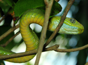 Трехметровую змею пришлось убить ростовчанам, которым отказались помочь в МЧС