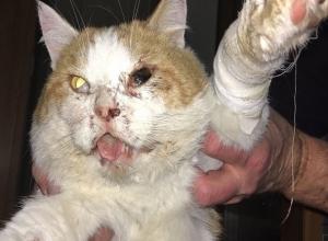 Беременную кошку и собаку расстреляли в Ростовской области на глазах семилетней девочки