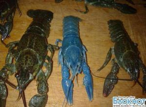 В Ростовской области рыбак выловил синего рака