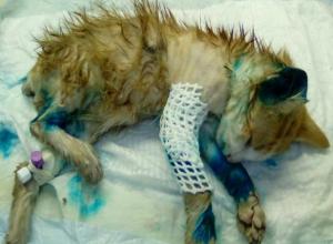 Растерзанного малыша с содранной кожей бросили умирать на детской площадке Ростова