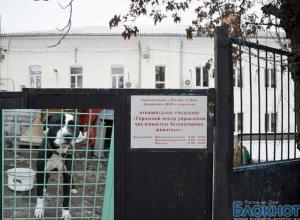 В Ростове Центр безнадзорных животных проверяет ОБЭП