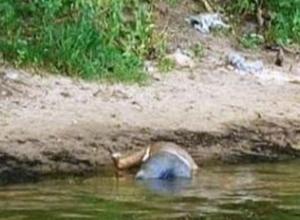 Труп мужчины в рыбацком комбинезоне достали из пруда в Ростовской области