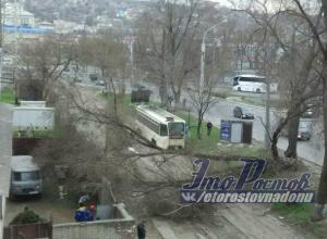 Движение трамваев в Ростове оказалось парализованным из-за упавшего дерева