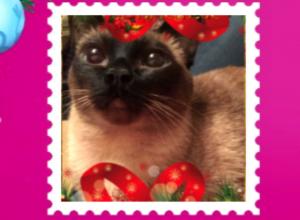 Красавица кошка из Ростова с «замурчательным» новогодним пожеланием покорила Москву