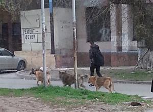 Стая агрессивных собак принялась атаковать людей и автомобили у школы в Ростове