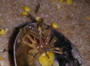Укус смертельно-ядовитого «золотого» паука отправил в больницу молодого жителя Ростова