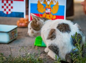 Кошка-предсказательница, похожая на футбольный мяч, ищет дом в Ростове