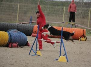 В Ростове прошли международные соревнования по аджилити