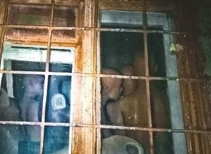 Выглядывающая из окна загадочной квартиры армия «зомби» ужаснула жителей Ростова