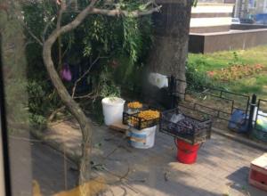 На продавцов фруктов в центре Ростова рухнула огромная ветка
