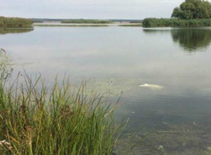 Обезображенное тело пенсионерки обнаружили в озере в Ростовской области