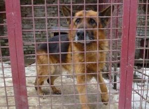 Зоозащитник: догхантеры объявили день зачистки от собак