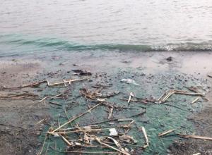 Токсичные стоки окрасили в ядовито-зеленый цвет реку Дон в Ростове