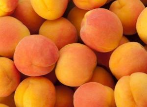 Почти 10 тонн фруктов с опасными насекомыми уничтожено в Ростове