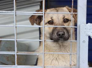 Началось строительство нового центра по содержанию безнадзорных животных в Ростове
