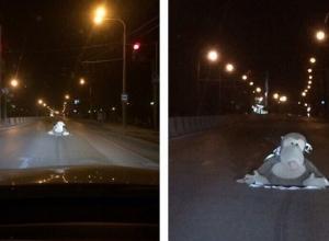 Обезьяна на проезжей части проспекта взбудоражила ростовчан