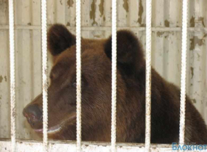Медведь включил пожарную сигнализацию во время представления, помещение залило водой