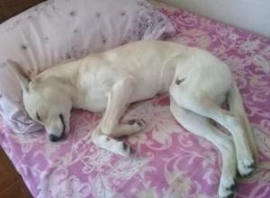 Удивительная история со сбитой собакой закончилась настоящей сказкой в Ростове