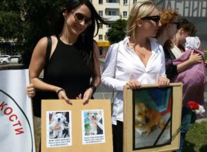Человеческого отношения к животным и строительства в Ростове современного приюта потребовали зоозащитники
