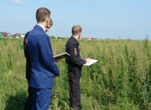 Собиравший в диком поле каннабис ростовчанин «попал» на десять лет тюрьмы