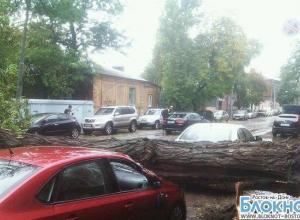 В Ростове-на-Дону дерево упало, повредив четыре автомобиля