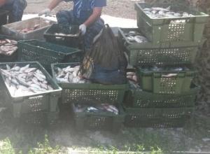 Браконьер из Ростовской области наловил «краснокнижной» рыбы на 200 тысяч рублей