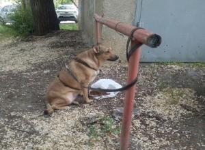 Несколько дней без еды и воды преданно ждет своего жестокого хозяина ростовский Хатико