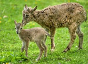 Рекордный всплеск рождаемости зафиксировали в зоопарке Ростова-на-Дону