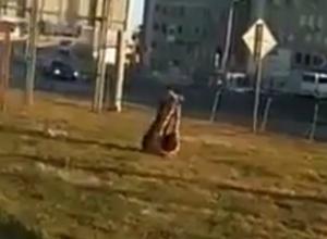 «Пьяная» аэробика лохматой гимнастки у вокзала Ростова подняла настроение горожанам на видео