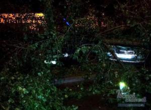 В Ростове на припаркованные «Тойоту» и Москвич упало дерево
