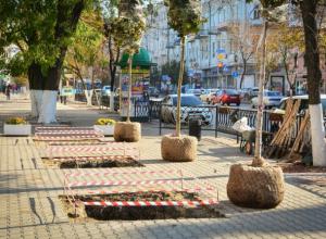 Позорным компромиссом назвал запланированную посадку деревьев в Ростове федеральный эксперт