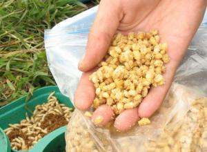 Пять тонн корма для рыб незаконно ввезли в Ростовскую область