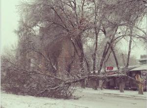 В Ростове под тяжестью снега упали несколько деревьев: повреждены три машины