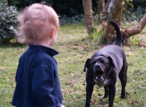 Выгуливать детей в намордниках посоветовала родителям владелица агрессивной собаки в Ростове