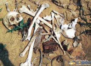 На берегу Цимлянского водохранилища в Ростовской области обнаружены человеческие кости
