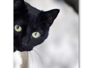 В Ростове осужденным наркотики передавали через кошку