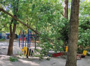 Дерево-убийца покушалось на ребенка, играющего в песочнице во дворе Ростова
