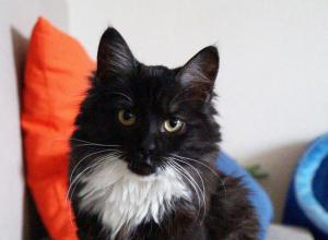 В Ростове кошка Черника готовится к свадьбе с Хвостиком