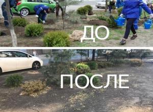 Дикие жители Ростова украли с улиц посаженные кустарники и цветы