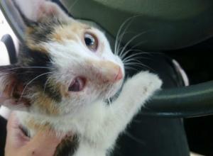Восемь пуль выстрелили в беспомощного котенка мерзкие живодеры в Ростовской области