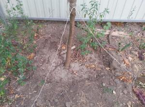 Молодые деревья в центре Ростова загибаются от нестерпимой жары и отсутствия полива