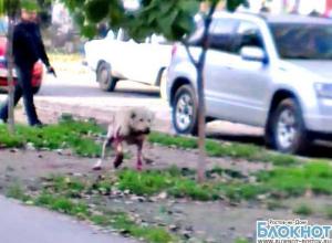 Расстрел собаки, напавшей на людей в Волгодонске, сняли на видео