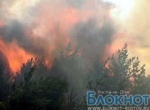 В Ростовской области горит сосновый лес