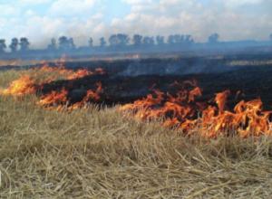 Штормовое предупреждение о чрезвычайной пожароопасности охватило большинство районов Ростовской области