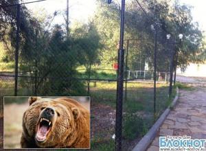 Девочка, которой на базе в Ростовской области медведь откусил руку, находится в реанимации