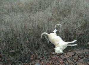 Кровавые живодеры продолжают воровать и пытать до смерти собак под Ростовом