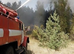 В Ростовской области горит лес: огнем охвачено около семи гектаров