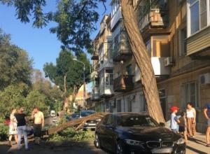Элитную иномарку повредило упавшее дерево в Ростове