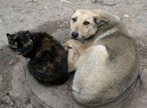Привитых и стерилизованных бродячих животных запретил выпускать обратно на улицы губернатор Ростовской области